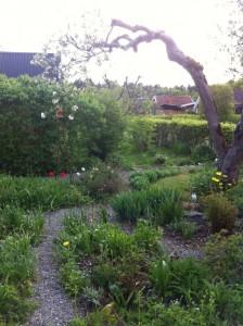 Kolonin våren 2012